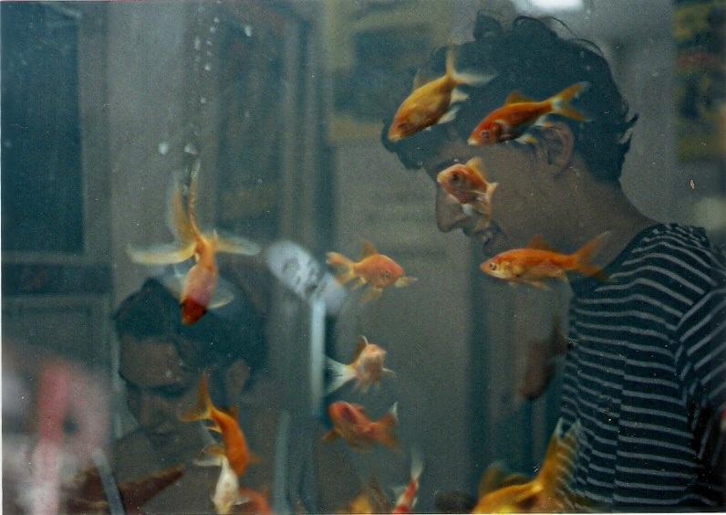 pecesitos_796